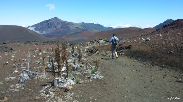 Haleakala-B-silverswords