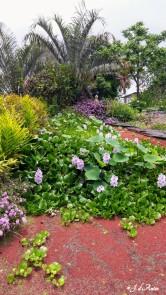Fleurs-MauiNui