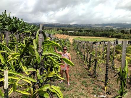 MauiNuiDragonfruit