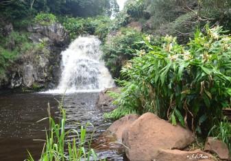 Waimea-river