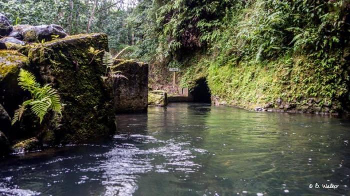 Kauai_tubing_tunnel